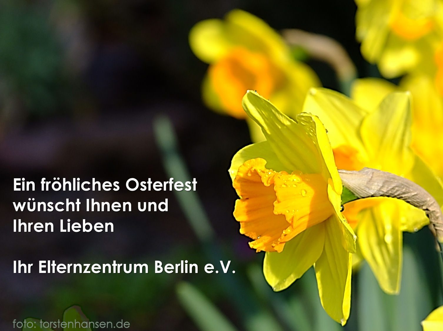 Fröhliche Ostern wünscht Ihr Elternzentrum Berlin e.V.